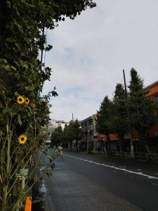 ルームズバー前のとちの木通りです。