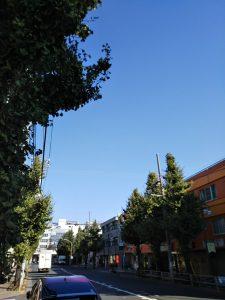 平成30年11月3日 今朝のとちの木通りです