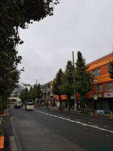 平成30年11月13日 朝のとちの木通りです