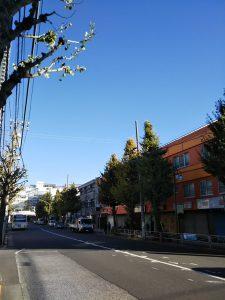 平成30年11月23日 朝のとちの木通りです