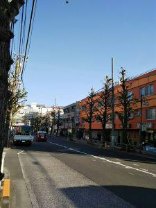 平成30年11月24日 朝のとちの木通りです