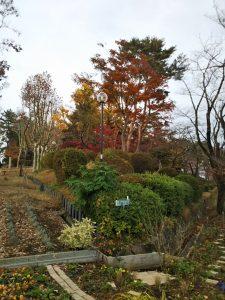 紅葉と緑の木