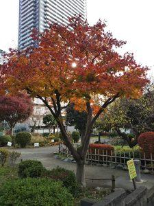 紅葉色に紅葉した木
