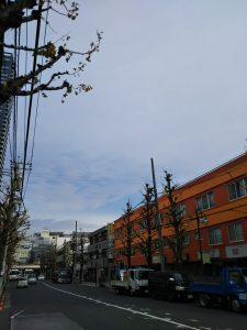 平成30年12月3日 今朝のとちの木通りです