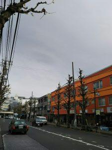 平成30年12月7日 朝のとちの木通りです