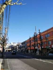 平成31年1月26日 朝のとちの木通りです