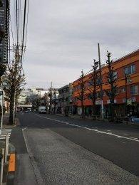平成31年1月28日 朝のとちの木通りです