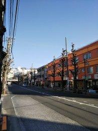 平成31年1月29日 朝のとちの木通りです