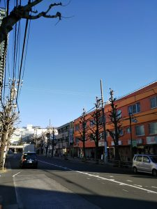平成31年1月5日 朝のとちの木通りです