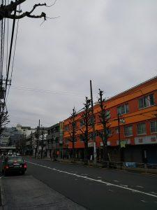 平成31年1月13日 朝のとちの木通りです