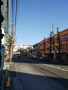 平成31年1月14日 朝のとちの木通りです
