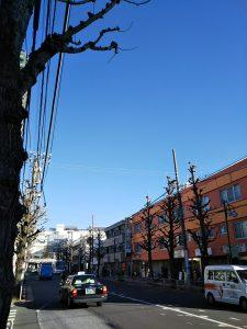 平成31年1月18日 朝のとちの木通りです