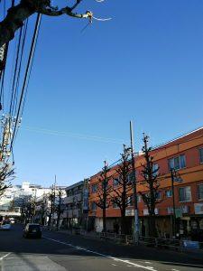 平成31年1月21日 朝のとちの木通りです
