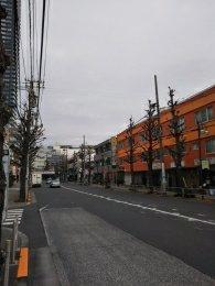 平成31年2月5日 朝のとちの木通りです