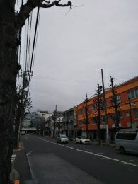 平成31年2月11日 朝のとちの木通りです