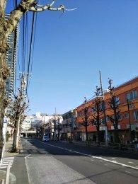 平成31年2月18日 朝のとちの木通りです