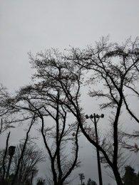 富士森公園の桜