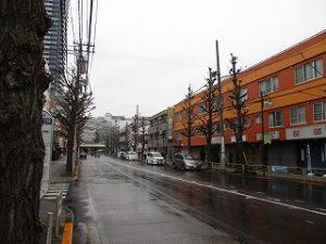平成31年3月3日 朝のとちの木通りです