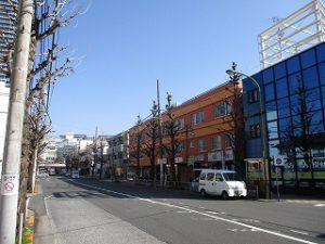 平成31年3月12日 朝のとちの木通りです