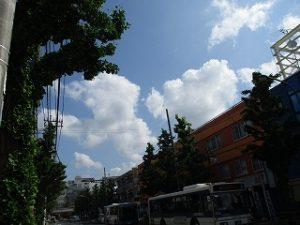令和元年5月17日 朝のとちの木通りです