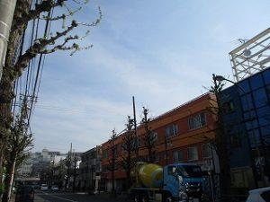 平成31年4月19日 朝のとちの木通りです