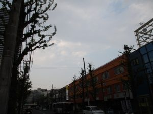 平成31年4月22日 夕方のとちの木通りです