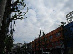 平成31年4月23日 朝のとちの木通りです