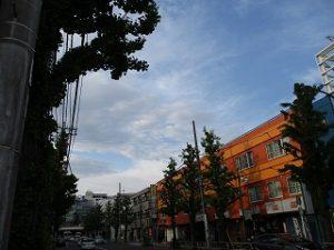 令和1年5月6日 夕方のとちの木通りです