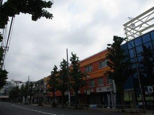 令和元年5月12日 朝のとちの木通りです