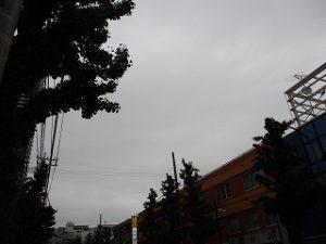 令和元年5月12日 夜のとちの木通りです