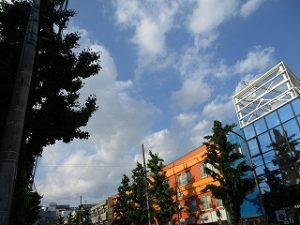令和元年5月17日 夕方のとちの木通りです