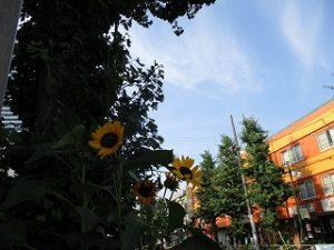 令和元年7月30日 夕方のルームズバー上空です