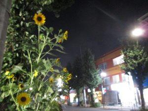 令和元年9月2日 夜のRoom's Bar上空です