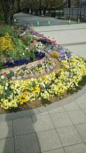 2020年4月11日 朝の富士森公園の花壇です