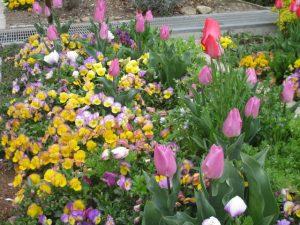 2020年4月12日 朝の富士森公園の花壇です