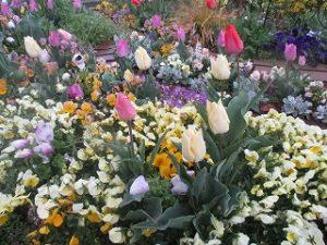 2020年4月13日 朝の富士森公園の花壇です