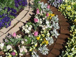 2020年4月14日 朝の富士森公園の花壇です
