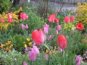 2020年4月18日 朝の富士森公園の花壇です