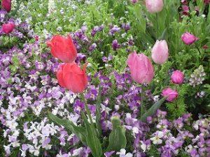 2020年4月20日 朝の富士森公園の花壇です