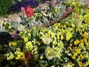 2020年4月25日 朝の富士森公園の花壇です