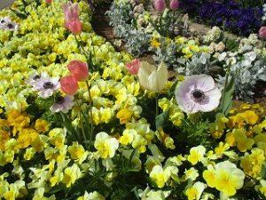 2020年4月26日 朝の富士森公園の花壇です