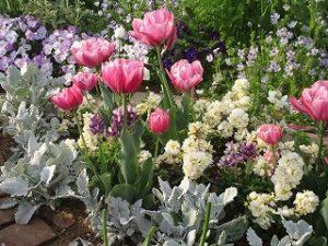2020年4月27日 朝の富士森公園の花壇です