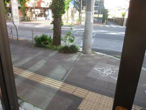 弊社店頭の歩道の植え込みに。。。