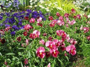 2020年5月25日 富士森公園の花壇です