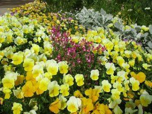 2020年5月28日 富士森公園の花壇です