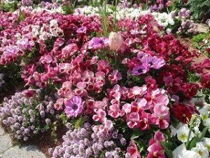 2020年5月1日 朝の富士森公園の花壇です