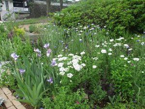 2020年5月9日 富士森公園の花壇です