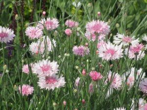 2020年6月5日 富士森公園の花壇です