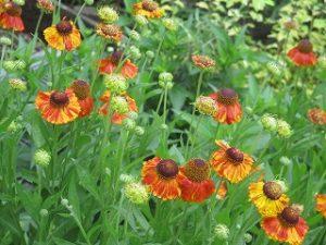 2020年6月14日 富士森公園の花壇です