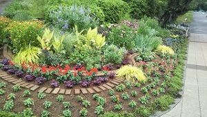 2020年7月6日 朝の富士森公園の花壇です
